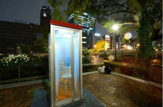 Аквариум с золотыми рыбками из старой телефонной будки