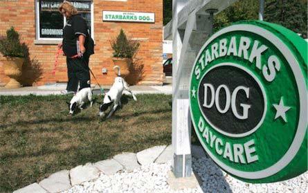 Как дневной приют для собак прославился благодаря Starbucks