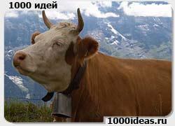 Система определения благоприятных дней для осеменения коров