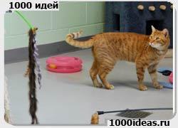 Игрушки для одиноких кошек, управляемые хозяином через Айфон