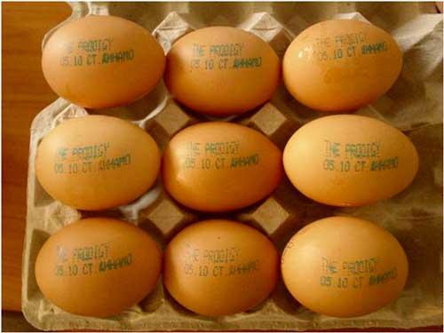 рекламный текст на яйцах