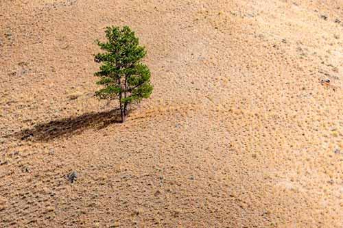 кавитационный шум деревьев