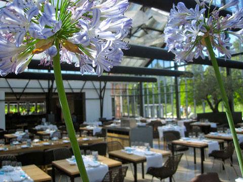 парниковый ресторан