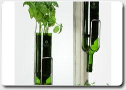 Бизнес идея №502. Коллекция цветочных горшков из винных бутылок для разведения пряных трав