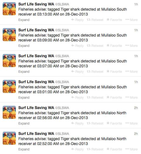 австралийские акулы в твиттере