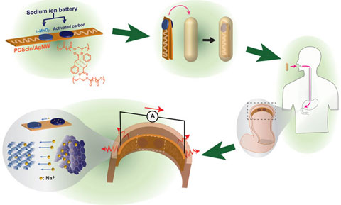 биоразлагаемые батарейки