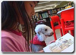 Бизнес идея №4935. Книжные собаки в детских библиотеках