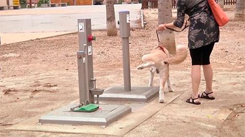 общественный туалет для собак