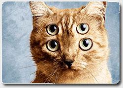 40 ярких примеров рекламы кошачьего корма
